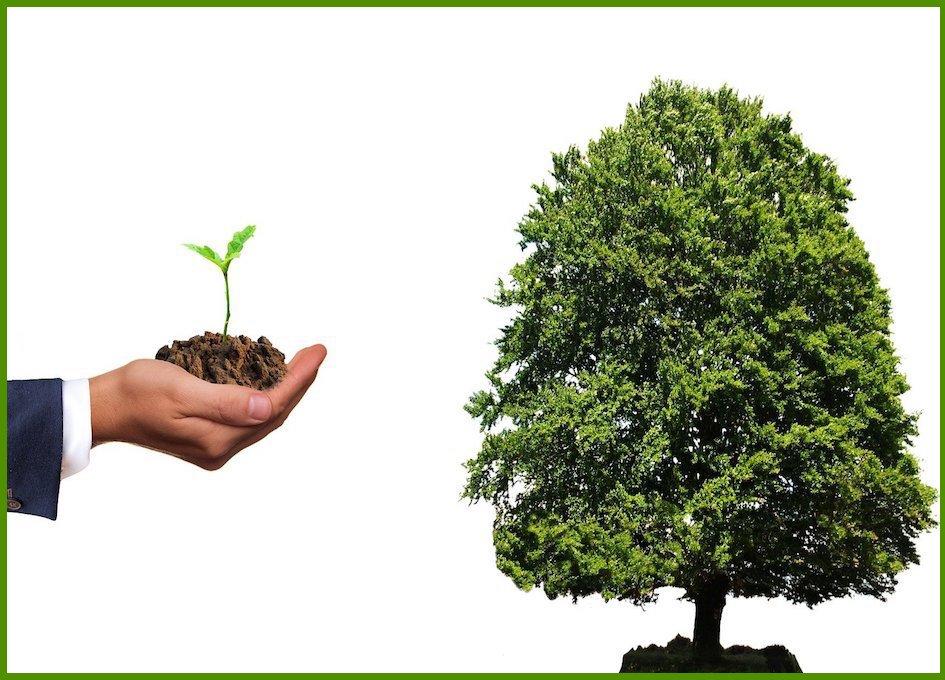 Geduld -vom Samen zum Baum